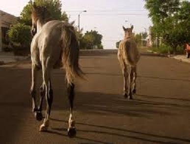 caballos sueltos