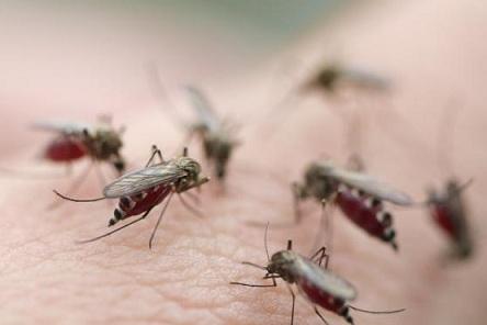 Fumigación contra los mosquitos