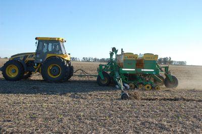 Prevén una caída del 15% en la siembra de trigo