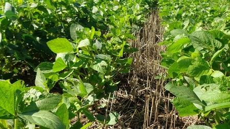 Programa Provincial de Buenas Prácticas Agropecuarias (BPA)