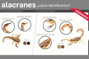 Recomendaciones para prevenir accidentes con alacranes, serpientes y arañas