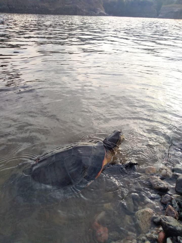 Andaban en kayak por el lago Piedras Moras y encontraron una tortuga