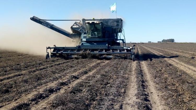 Para el maní, la cosecha también sería la mayor de la historia