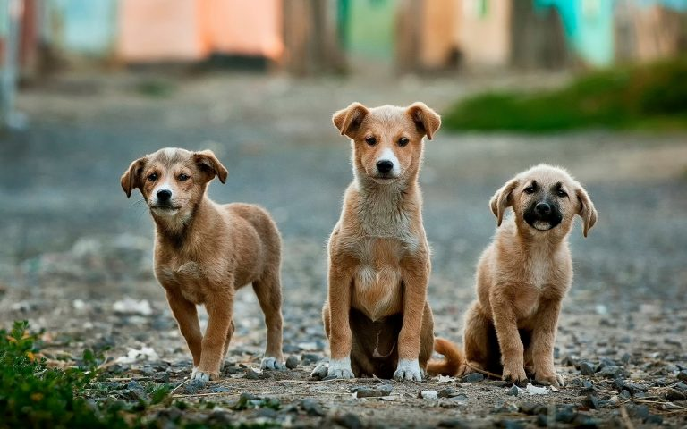 RIO CUARTO: el domingo se realizará la primera feria de adopción de perro