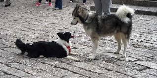 BALLESTEROS SUD: censaron 247 perros, uno cada 2,5 habitantes