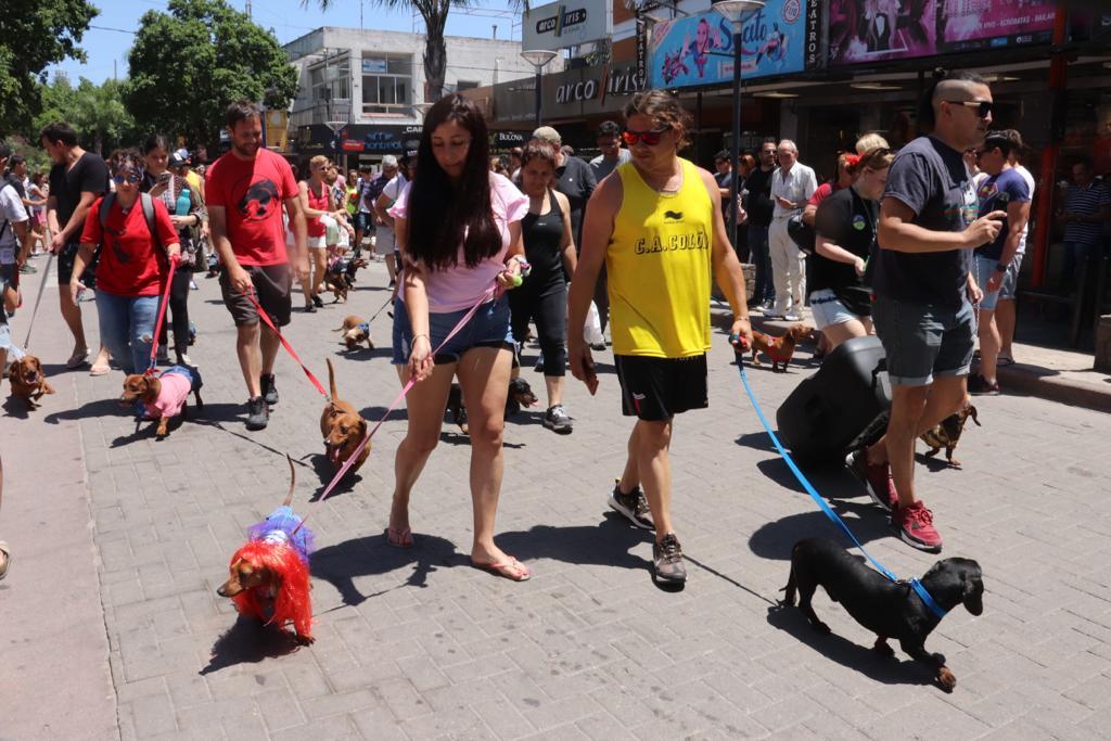 VILLA CARLOS PAZ: el encuentro nacional de perros salchichas fue el principal atractivo del fin de semana