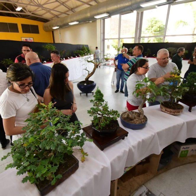 VILLA MARIA: impactante muestra de bonsái