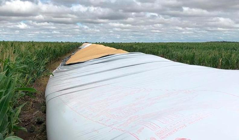 Jovita: denuncian daños en silobolsas con casi mil toneladas de soja