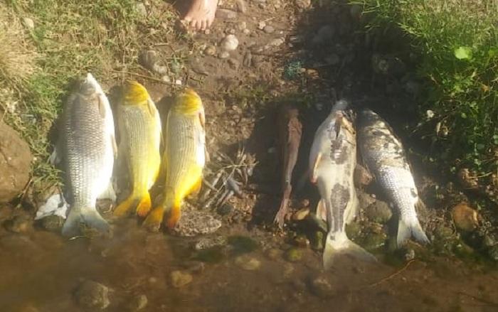 RÍO TERCERO: aparecieron peces muertos en el río Ctalamochita