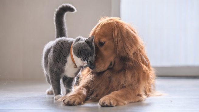 BALLESTEROS SUD: vacunaron a domicilio a más de 200 perros y gatos