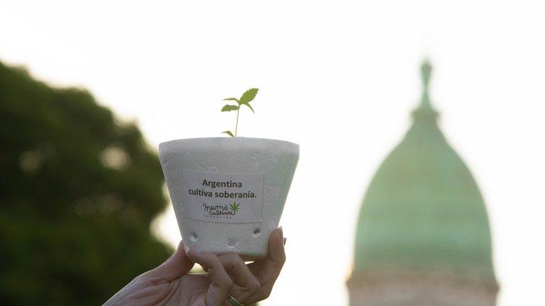 Cannabis medicinal: el Gobierno permitirá el cultivo personal y el expendio de aceites en farmacias