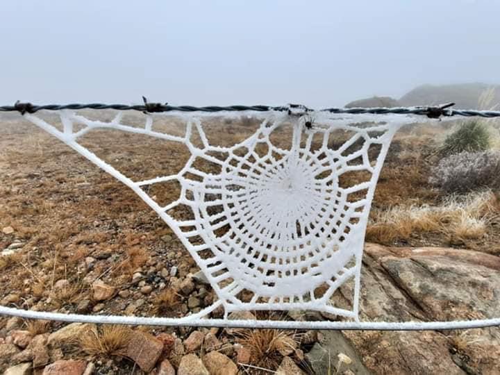 El frío congeló una telaraña en las altas cumbres