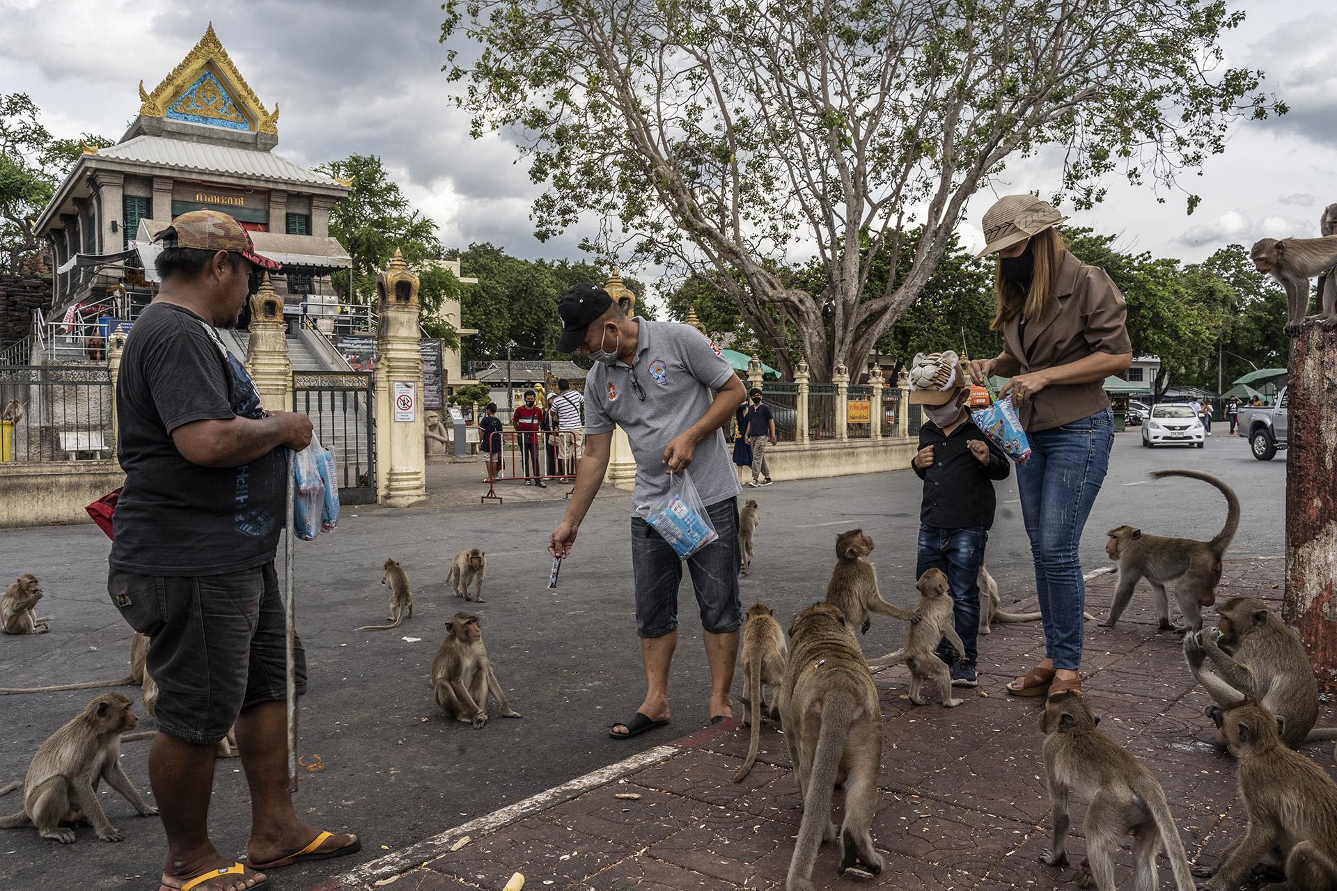 Cómo se vive en la ciudad de Tailandia que fue invadida por más de 8 mil monos