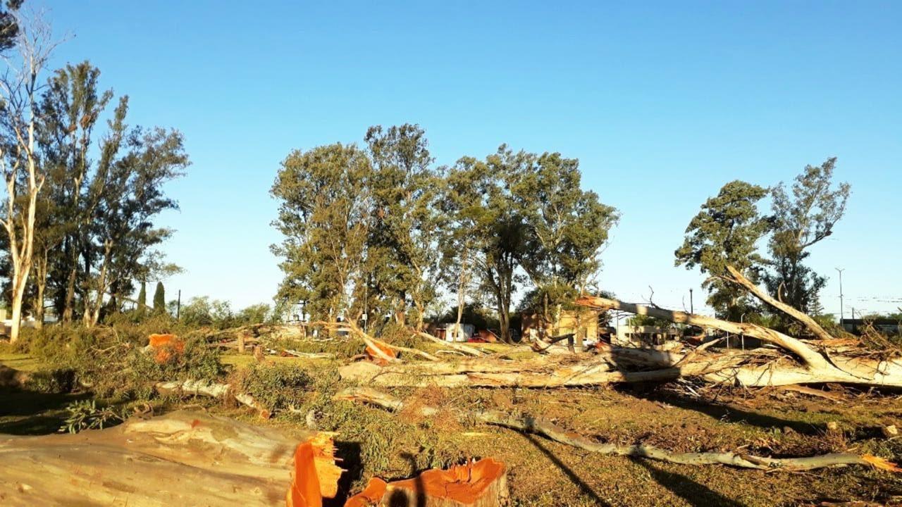 La Carlota: malestar por la tala de árboles añejos en la Plaza Italia