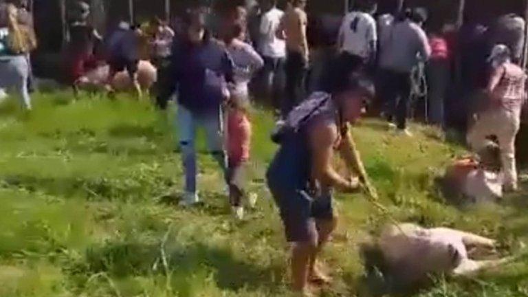 Volcó un camión con cerdos en Pilar y vecinos los carnearon en la calle y se los llevaron