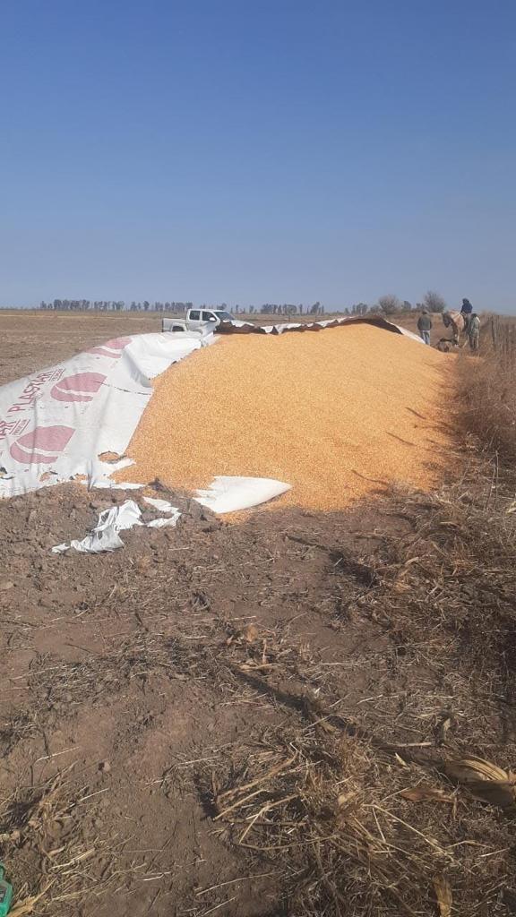 Delito Rural: rompieron silobolsas y alambrados en el campo de un productor carlotense